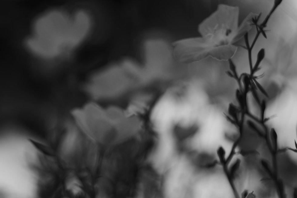 fleurs pentacon.jpg