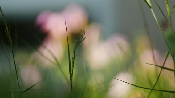 Blur Nature