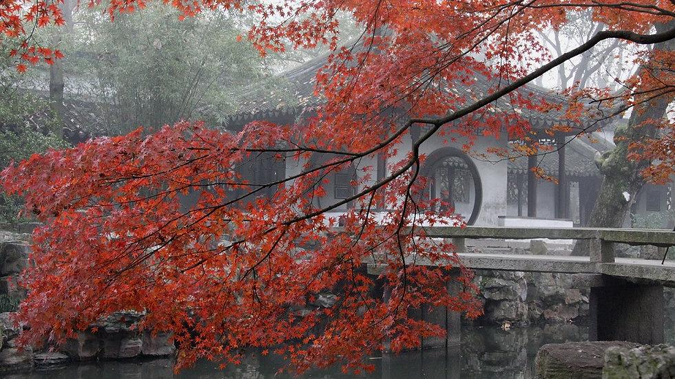 CHINA, Raices de China