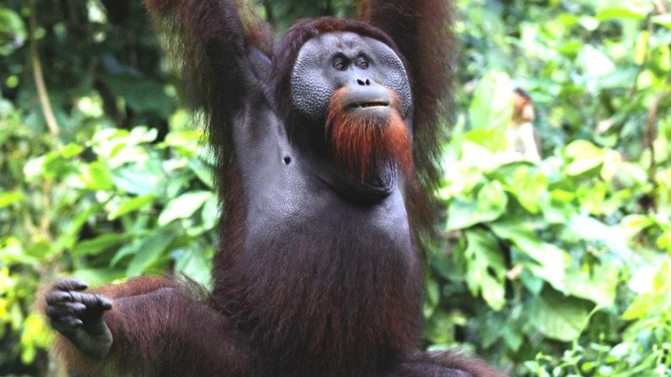 MALASIA,  Selvas y tesoros de Borneo
