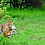 Thumbnail: INDIA - NEPAL, Birding & Wildlife Tour