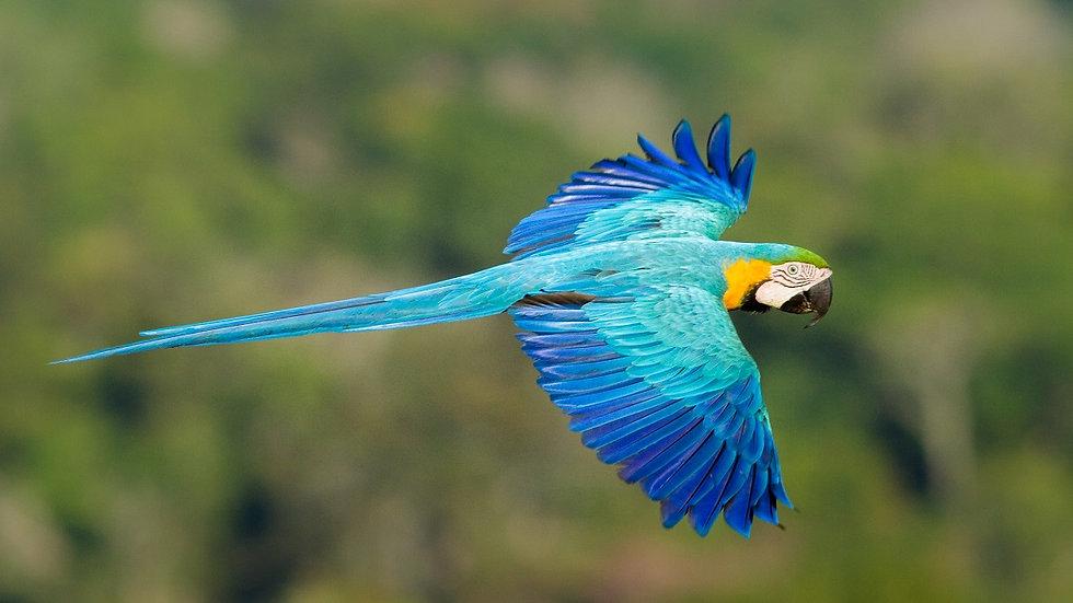 BRASIL, Amazonas Experience en Cristalino Lodge