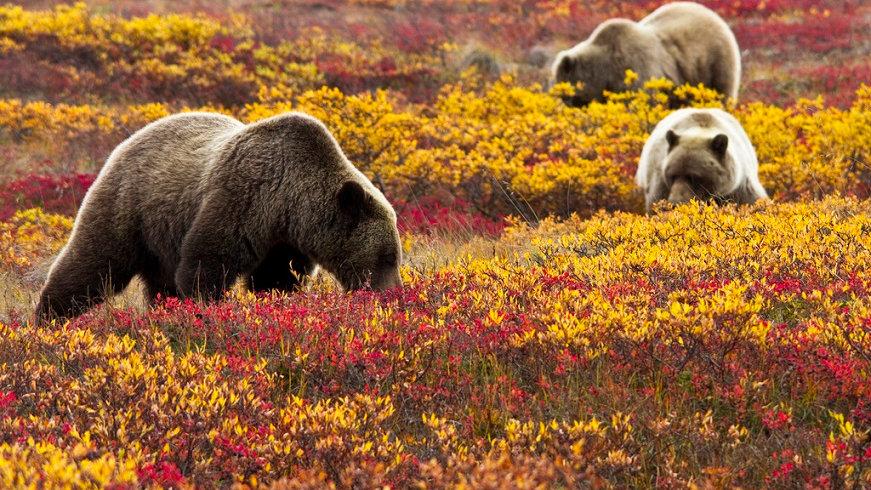 ALASKA,  Parques Nacionales de Alaska