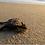 Thumbnail: MÉXICO, BAJA CALIFORNIA SUR, Aves, ballenas y vida salvaje