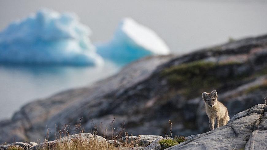 GROENLANDIA, Experiencias árticas en la país de los inuits