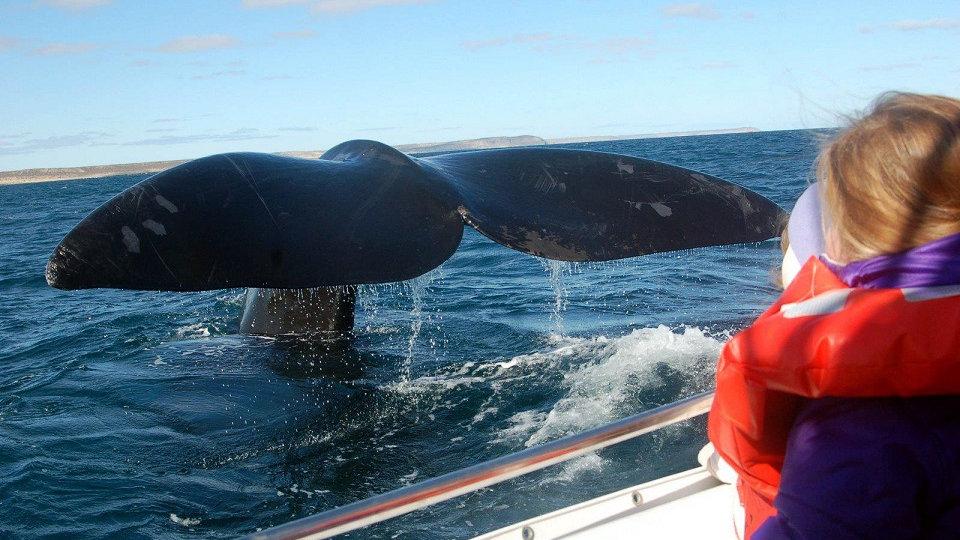 ARGENTINA con ballenas