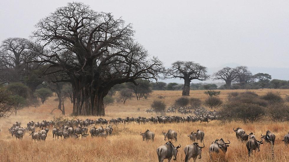 KENIA, Safari La Gran Migración en Masai Mara, 5 días