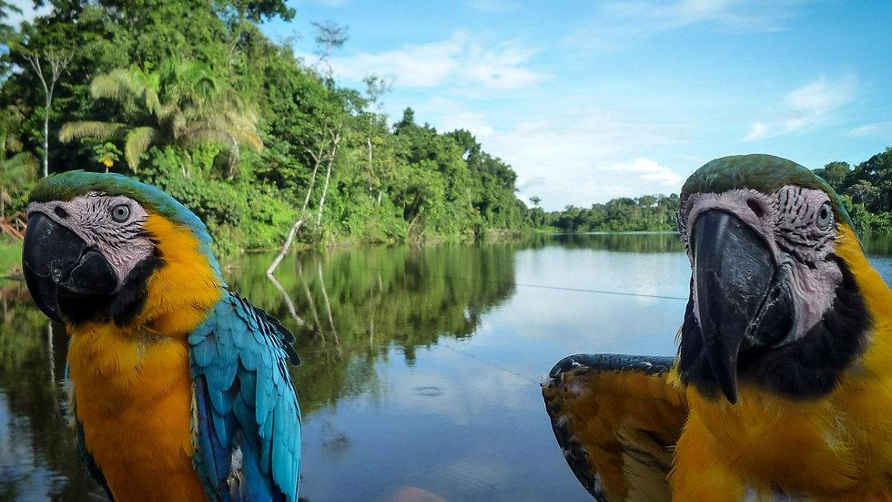 COLOMBIA,  Experiencias Colombianas con Amazonas