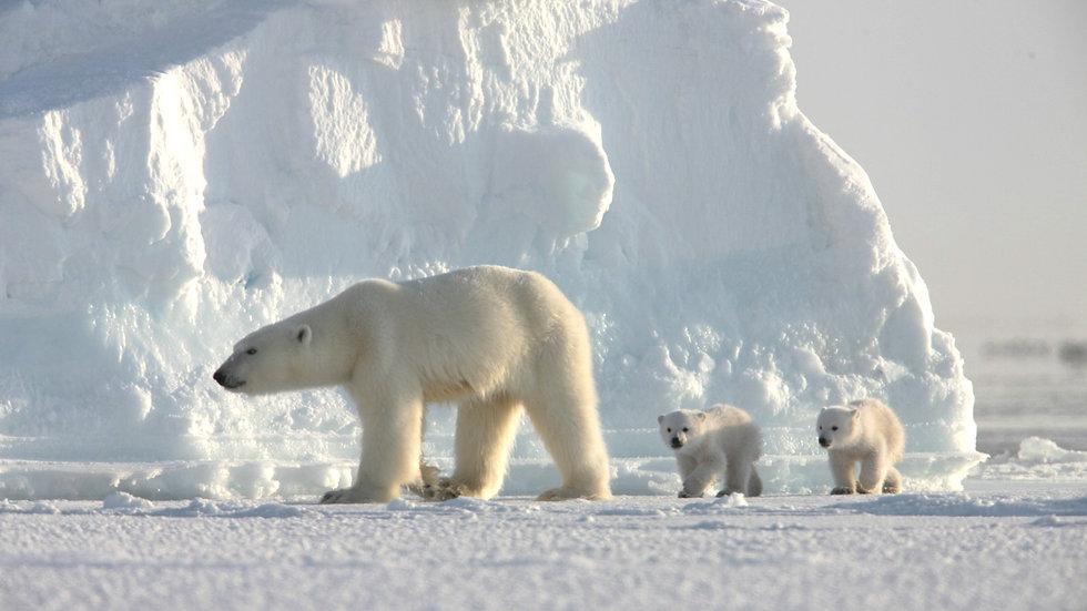 NORUEGA, SVALBARD, Sensaciones árticas (a medida)
