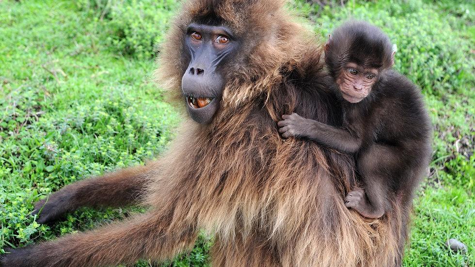 ETIOPÍA, Birdwatching & Wildlife,  Observación de aves y fauna salvaje, 10 días