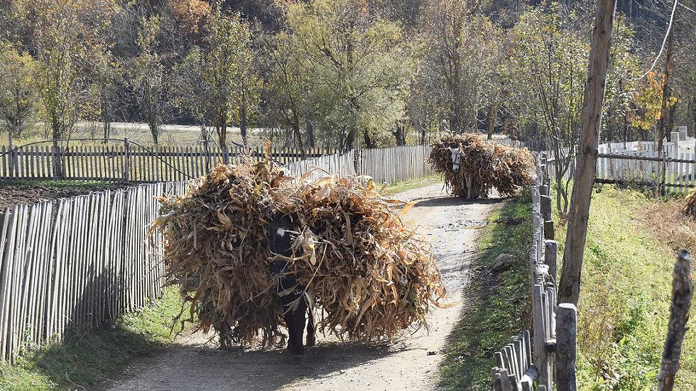 ALBANIA,  Albania Rural