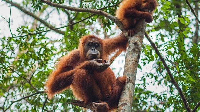 INDONESIA,  Norte de Sumatra Experience