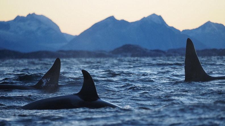 NORUEGA, Norte de Noruega, Safari de Ballenas - Aurora Boreal