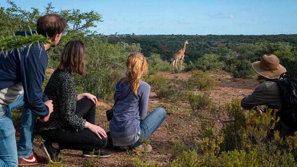 SUDÁFRICA,  Reserva Bellevue Forest, Caminando entre girafas