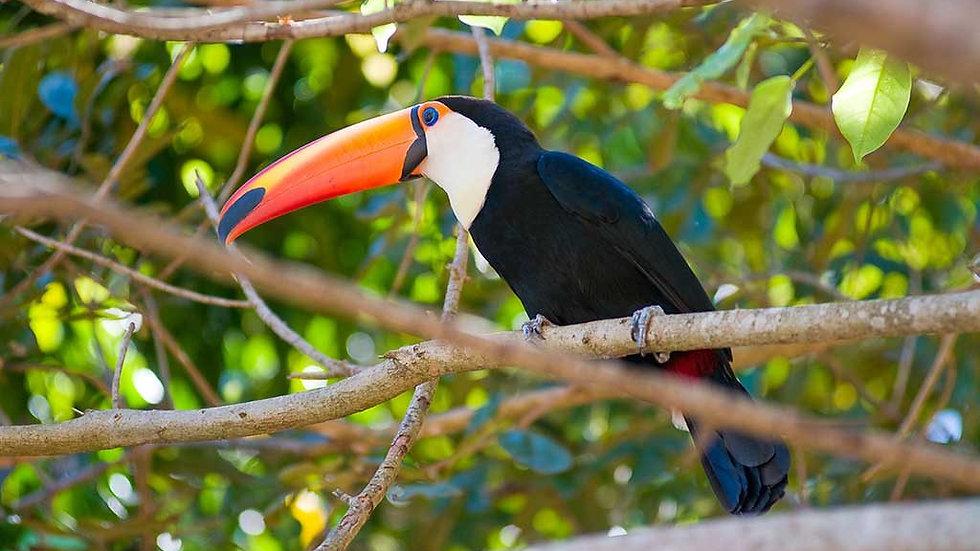 BRASIL,  Experiencia Pantanal Norte, Tesoros de la Naturaleza