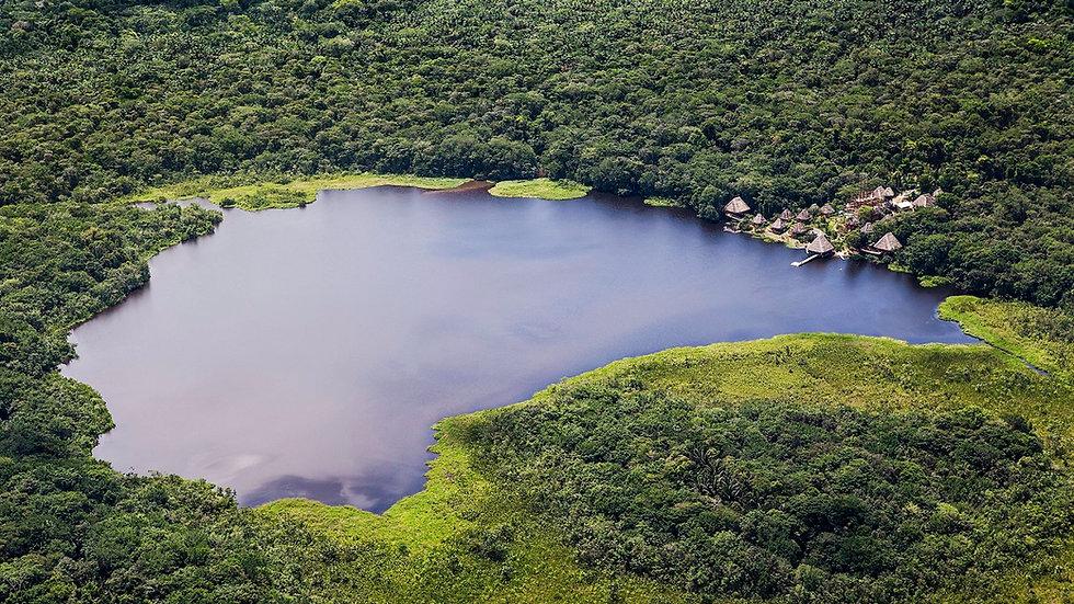 ECUADOR, Selva del Amazonas, Parque Nacional  Yasuní
