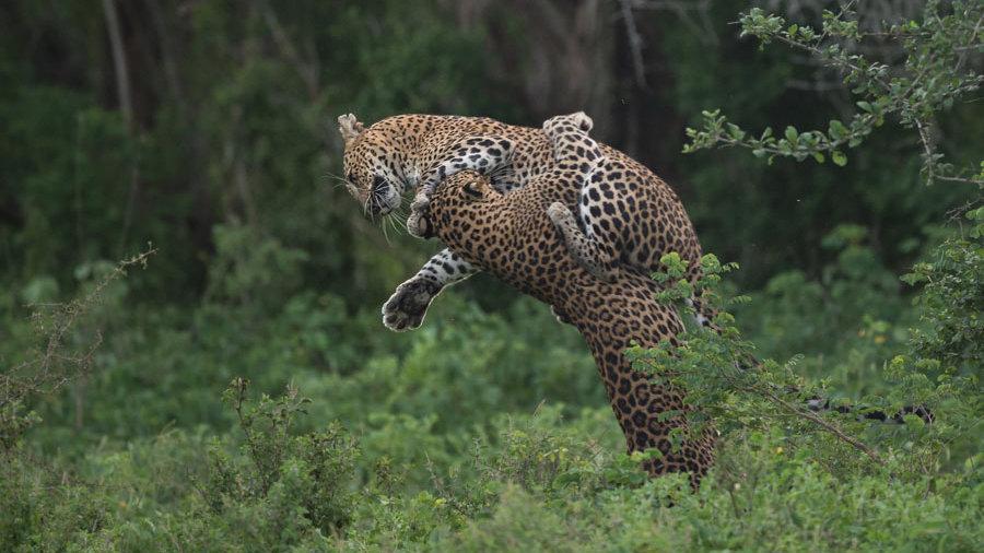 SRI LANKA, Fauna salvaje y naturaleza en Sri Lanka