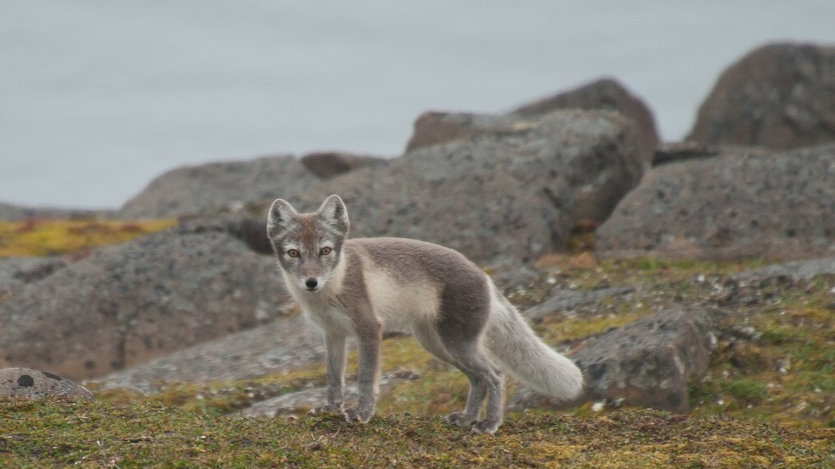 NORUEGA, SVALBARD, Expedición Ártica