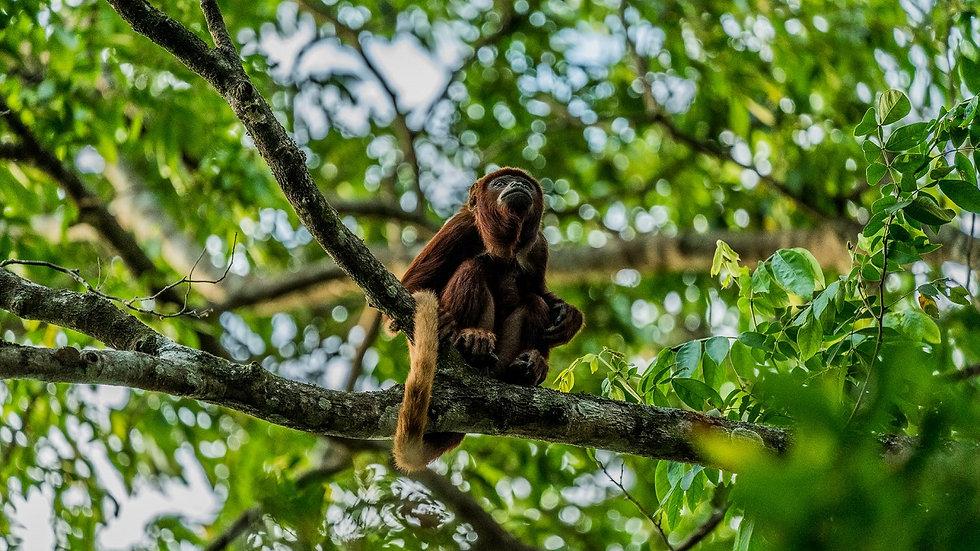 COLOMBIA,  Wildlife Trek