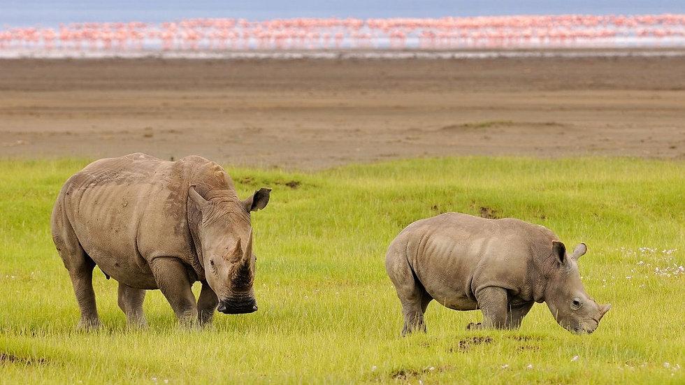 KENIA, Gran Safari de Kenia