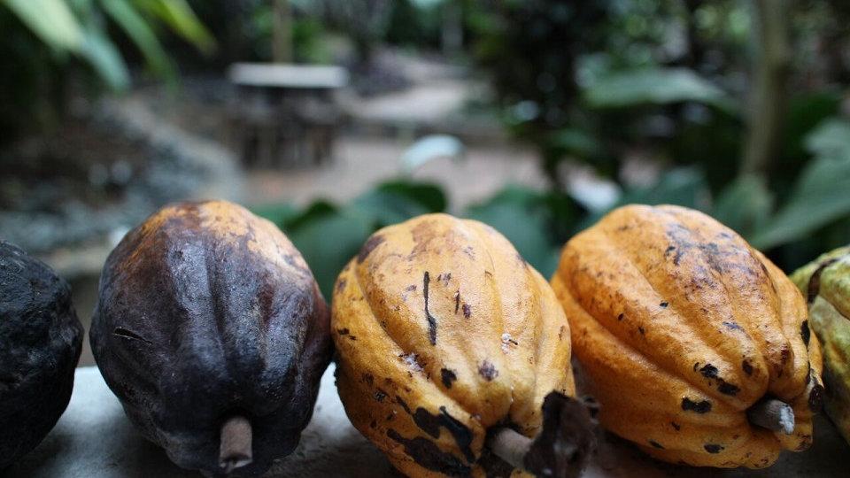 BRASIL, Experiencia La Ruta del Chocolate