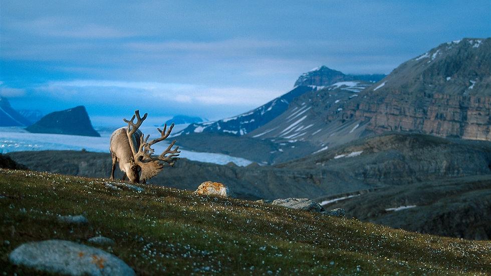 NORUEGA, SVALBARD, Trekking en Svalbard