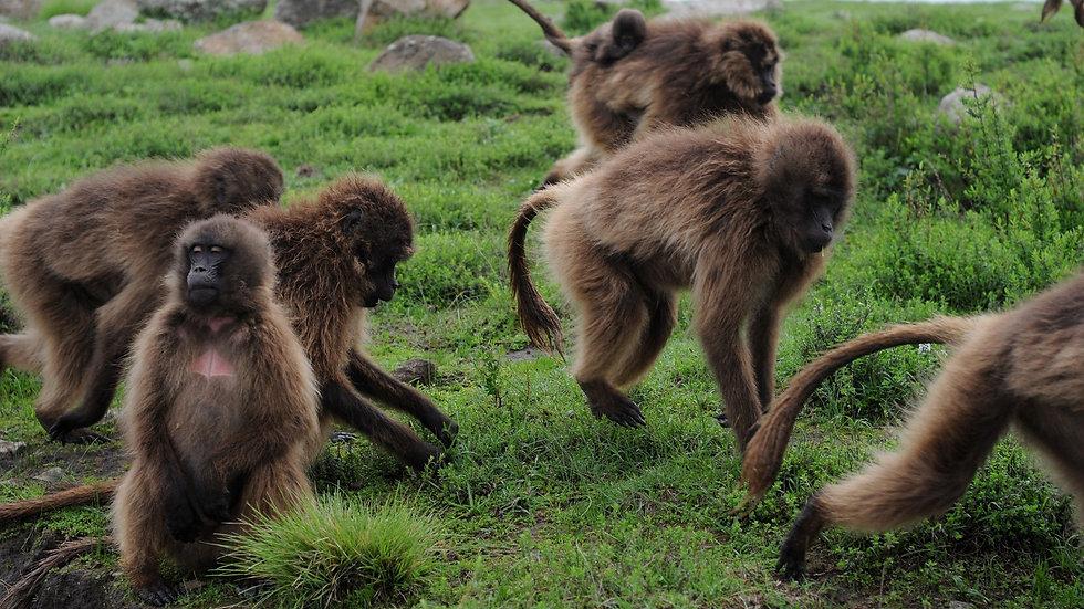 ETIOPÍA, Birdwatching & Wildlife, Observación de aves y fauna salvaje, 7 días
