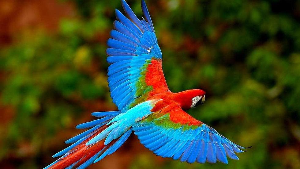 BRASIL,  Experiencia Pantanal Sur,  Ecoturismo y aventuras