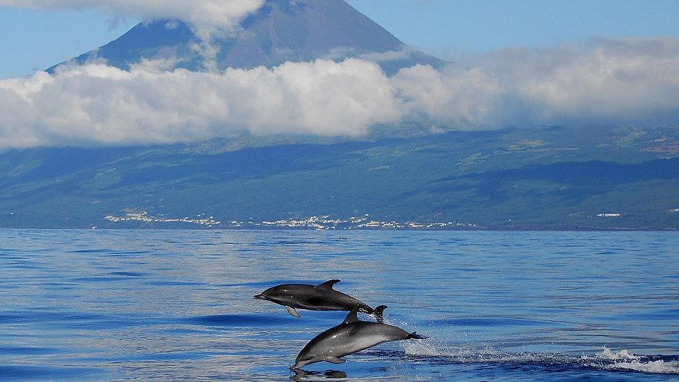 ISLAS AZORES, PICO, Senderismo y ballenas