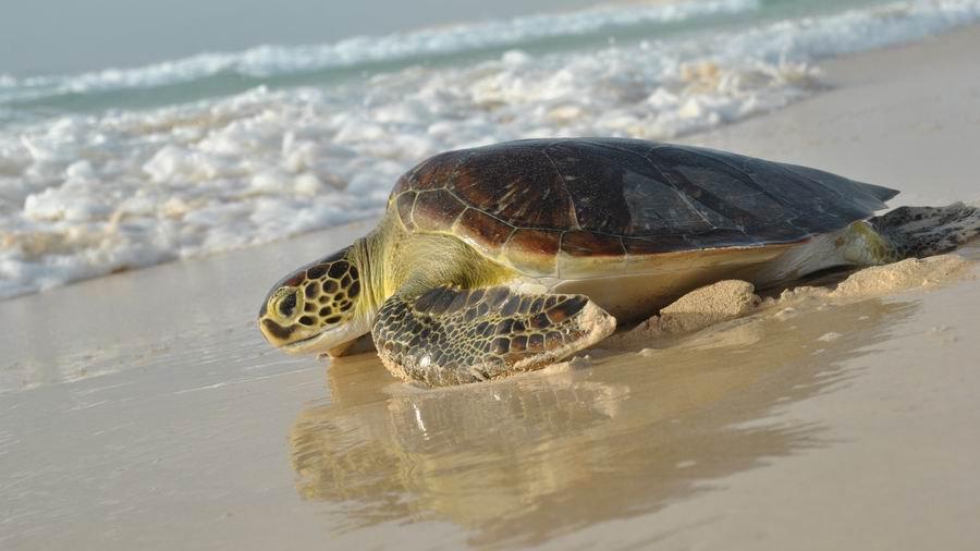 CABO VERDE, Naturaleza Salvaje en Boa Vista