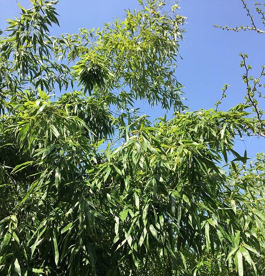 beplantning-bambus.JPG