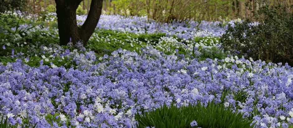 Blomsterhav til våren?