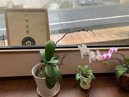 4/29 木祝 雨