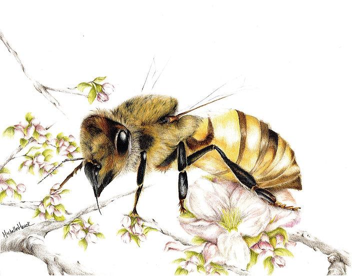 """""""Honey Bee"""" matted 8""""x10"""" Fine Art Print"""