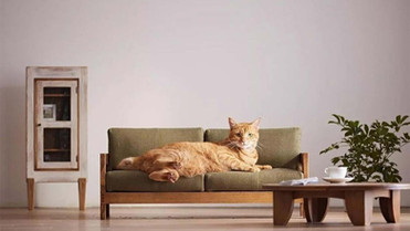 The Holy Grail: Tips on Apartment Hunting with Pets in the San Francisco Bay Area!
