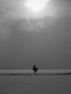 Che Simons - monochrome lonely tree.JPG