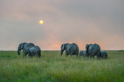 Elephants (1 of 1)