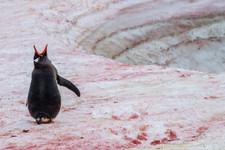 Antarctica 9.jpg
