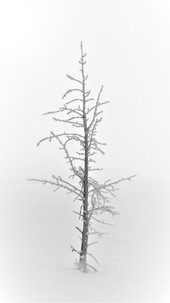 Che Simons - Dead Tree B&W.jpg