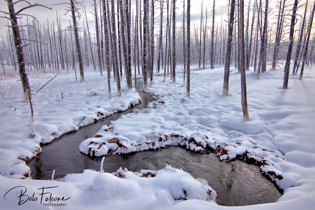 Bob Falcone - YellowstoneBobbySoxForestF