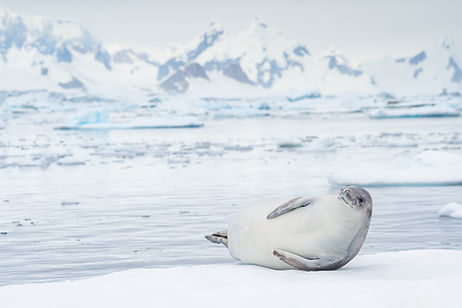 Antarctica (3 of 8).jpg