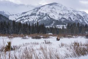 Leah Meade - Lone Bison1.jpg