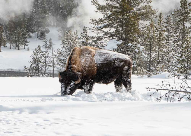 Nancy Panicucci Roma - Yellowstone 2020-