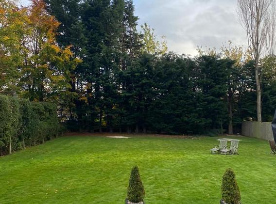 Conifer Hedge 2.jpg