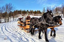 2015 sleigh