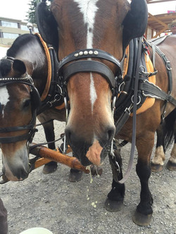 horse noses