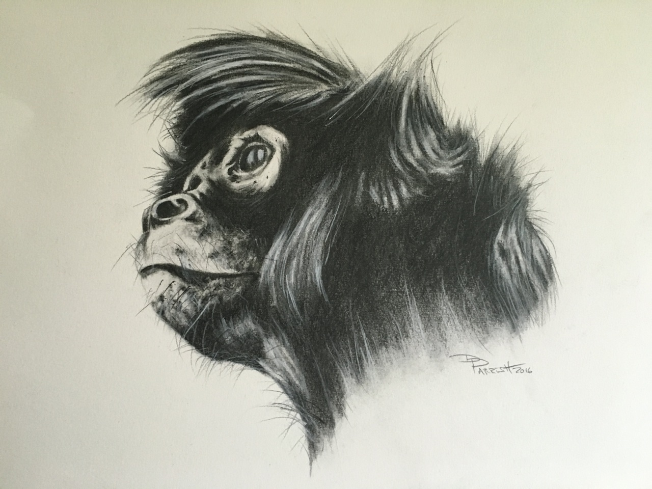 Spider Monkey 2016