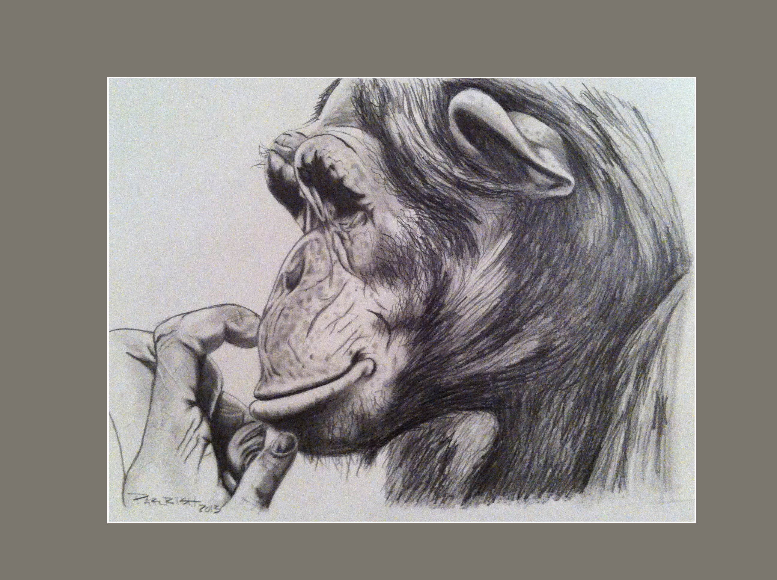 Chimpanzee In Thought