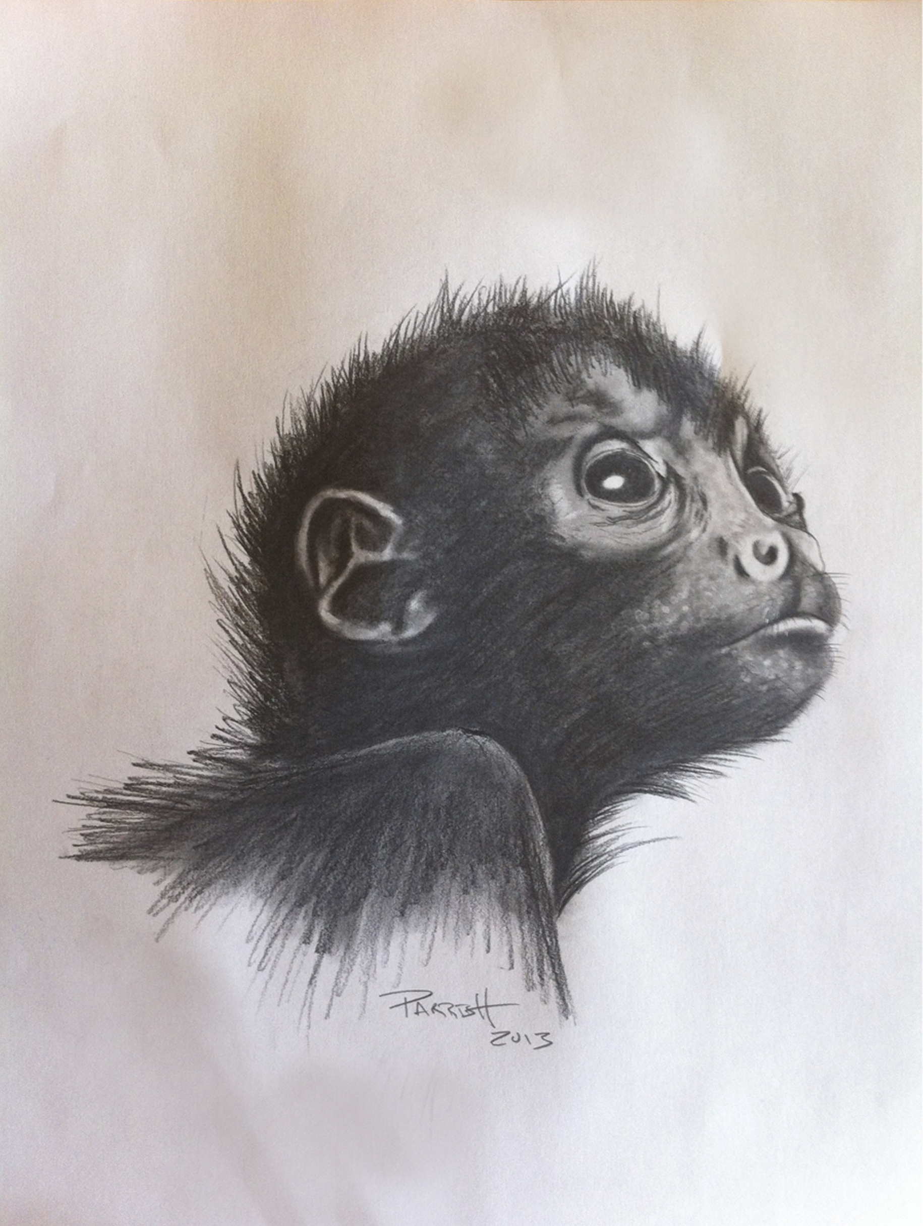 DennisParrish_SpiderMonkey_GraphiteCharcoal_10x12