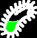 Asset 12bacteria.png